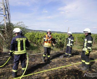 Neben den D-Schläuchen kamen auch Waldbrandpatschen zum Einsatz