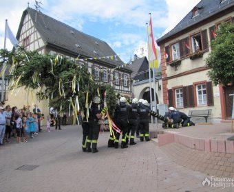 Die Hallgartener Feuerwehr stellt den Kerbebaum 2017