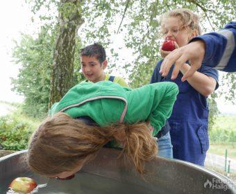 Versuch einer Haarsicherung beim Apfelfischen