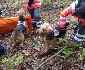 Personensuche-Rettungshunde