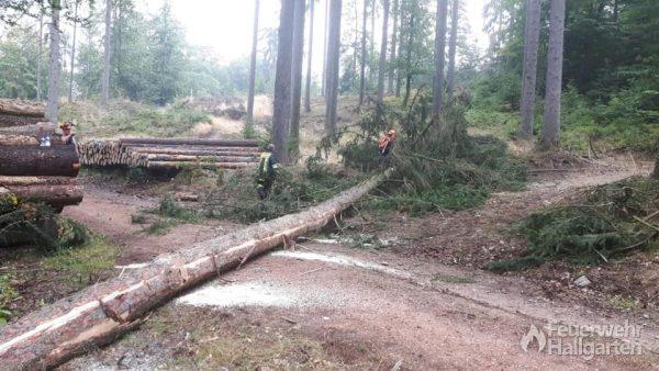 Brennender Baum nach Blitzeinschlag