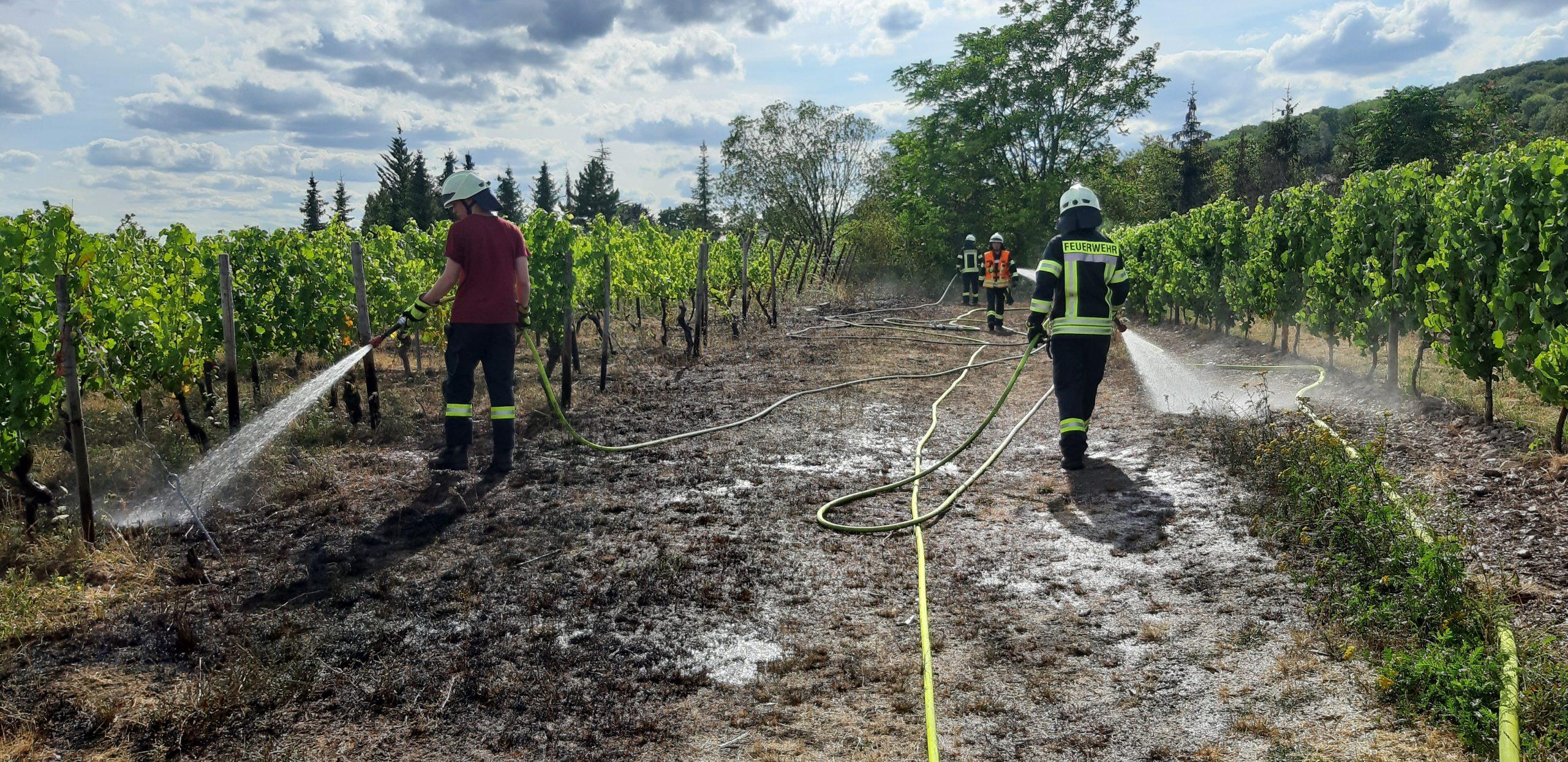 20200802_Flächenbrand in Hallgarten (10)
